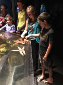 Aquarium Touch Pools for Kids