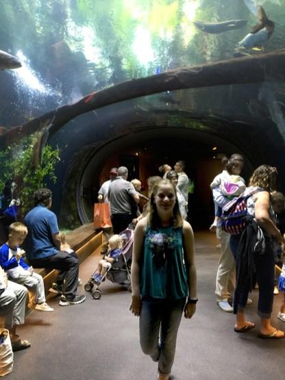 Steinhart Aquarium at the California Academy of Sciences