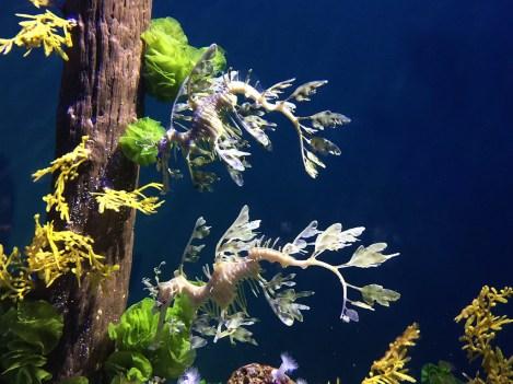 Steinhart Aquarium in San Francisco