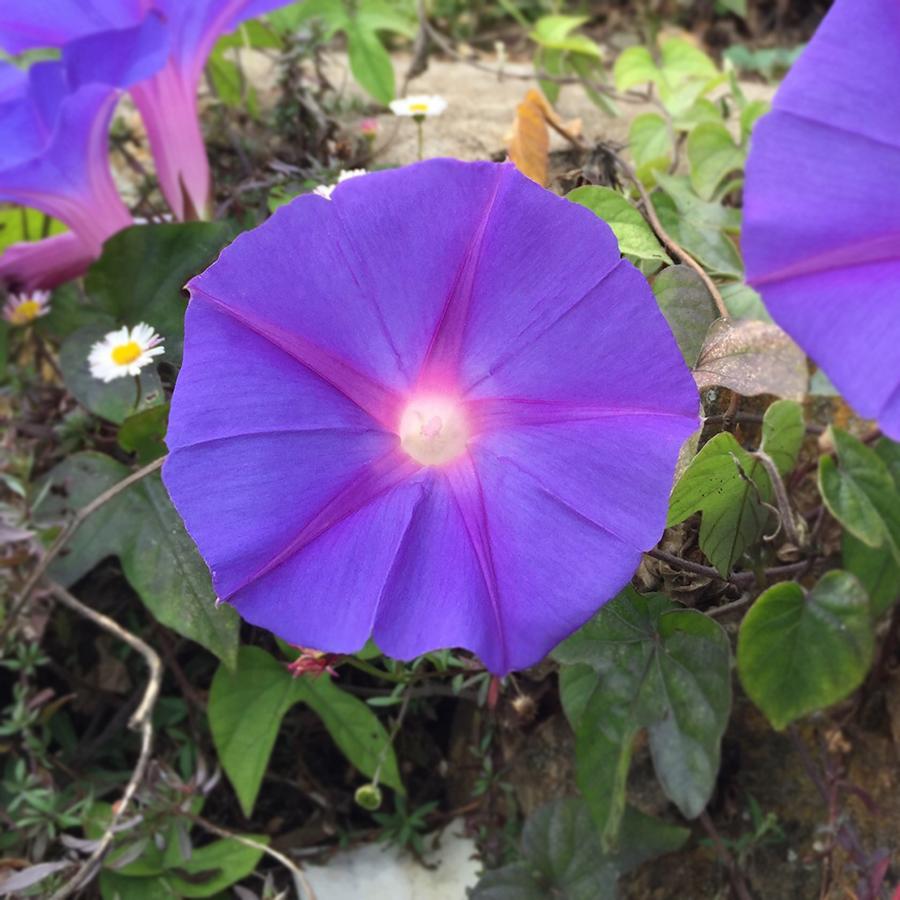Sutro Garden Flowers