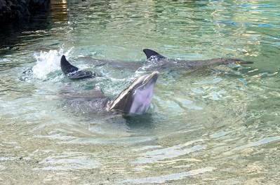 Hilton Waikoloa Village Dolphins