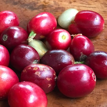 Red Kona Coffee Berries