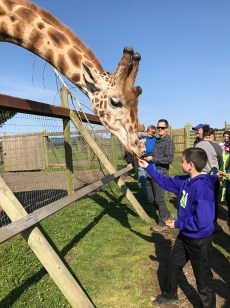 Carter Bourn Feeding Rothschild Giraffes