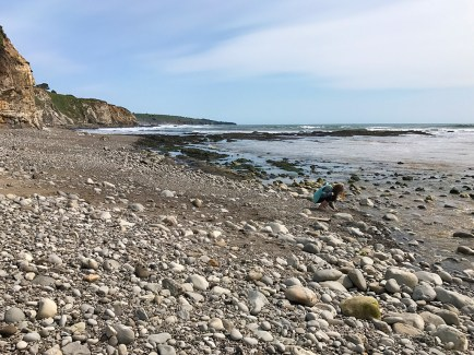 Hunting for Shells at Moat Creek Beach
