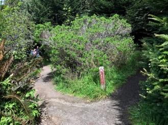 Jug Handle Beach Trail