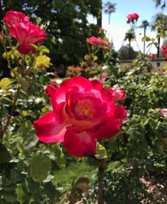 Mission Santa Clara Cemetary Rose Garden