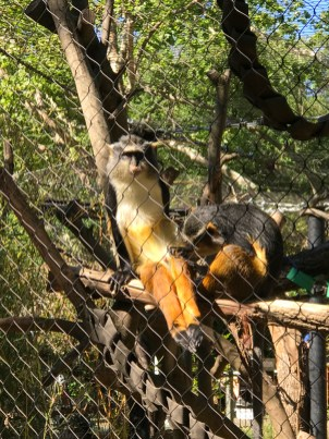 Monkeys at The Sacramento Zoo