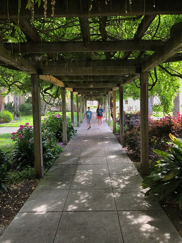 Old Wisteria Covered Walkway