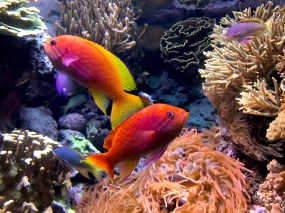 Family-Friendly Aquarium in Chicago with Gorgeous Tropical Fish