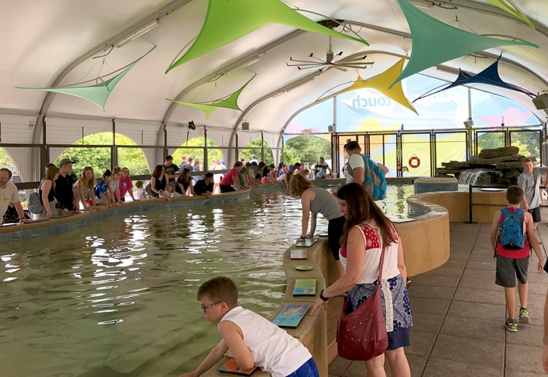 Shedd Aquarium Stingray Touch Pool