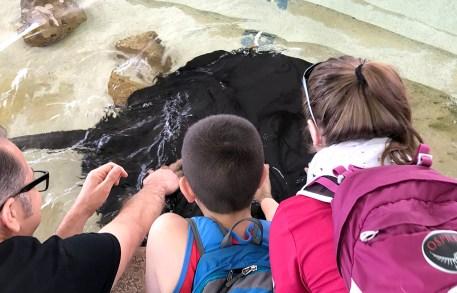 Stingray Touch at the Shedd Aquarium