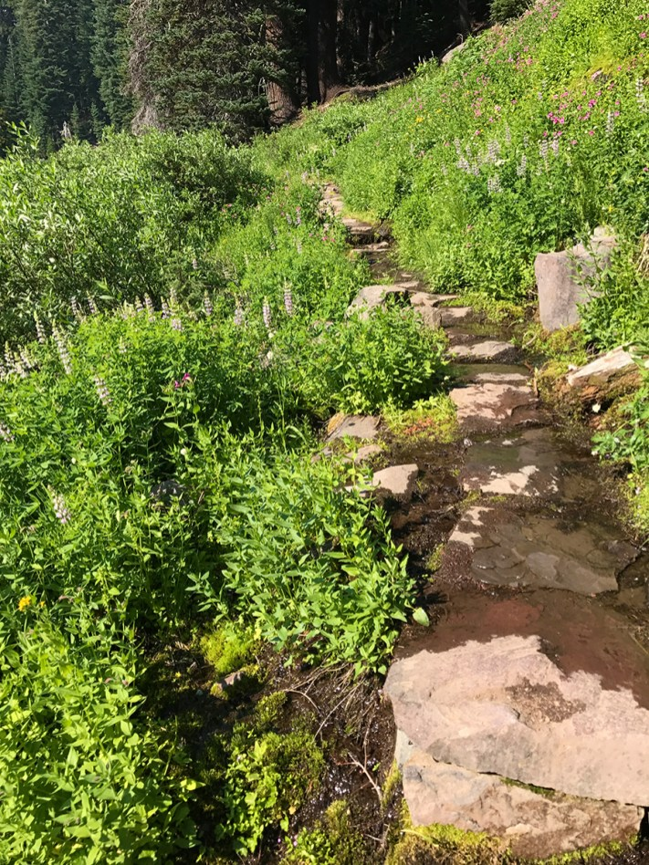 Wet Meadow Rock Trail