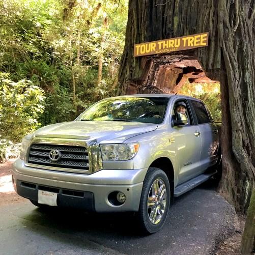 Brian Bourn Driving Through The Klamath Tour-Thru Tree