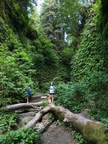 Fern Canyon Fallen Tree