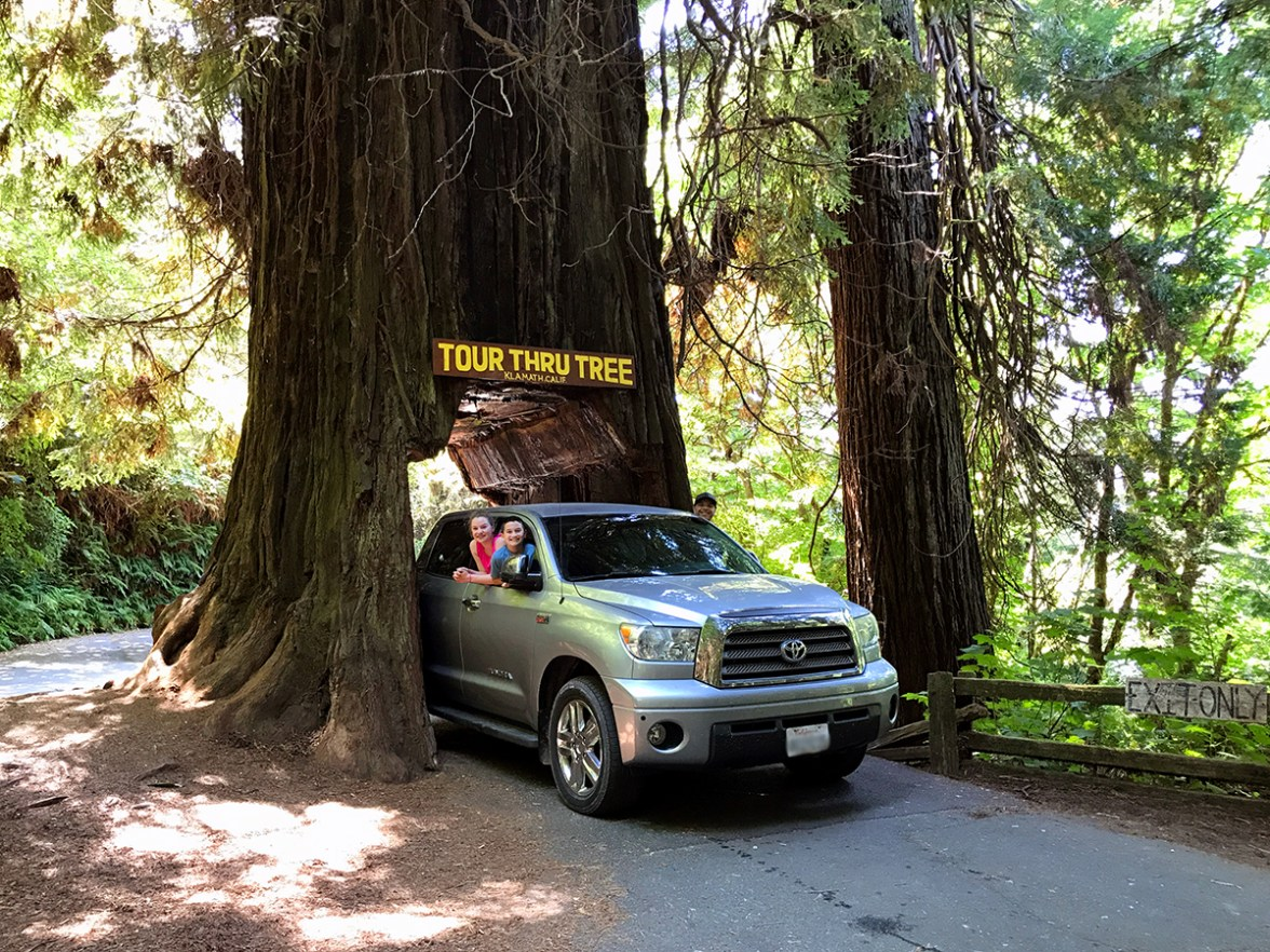 Truck Driving Through The Klamath Tour-Thru Tree