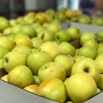 Boxes of Apple Hill Apples