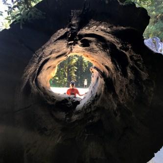 Giant Hollow Redwood Log