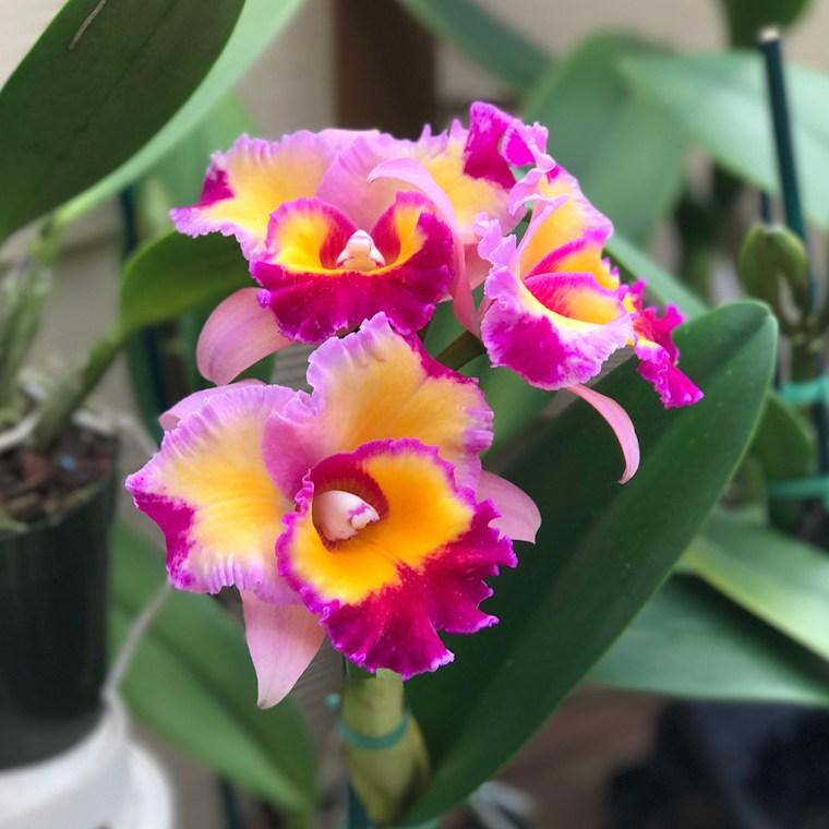 Hawaiian Orchid Flower Shop