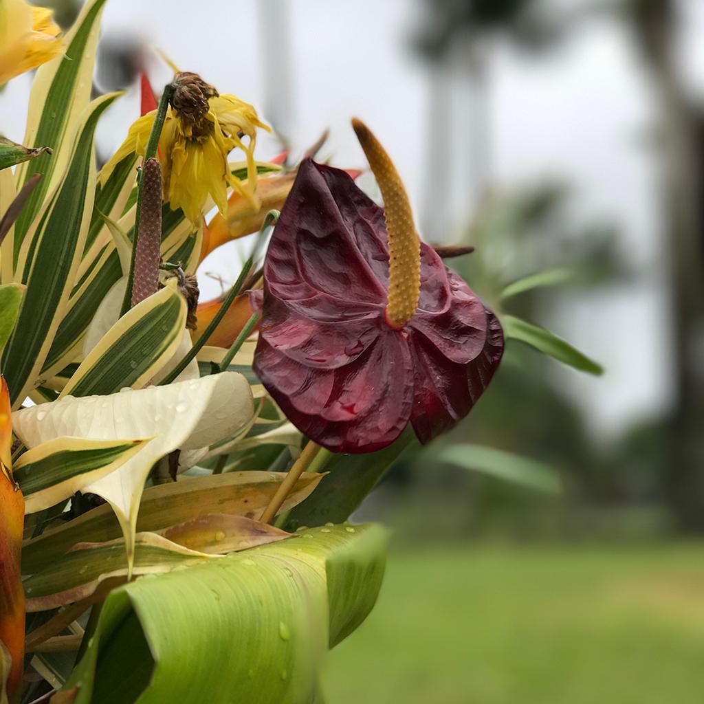 King kamehameha the great statue in hilo hawaii pretty hawaiian flowers izmirmasajfo