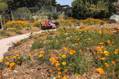 Brian and Carter Bourn Among California Poppies