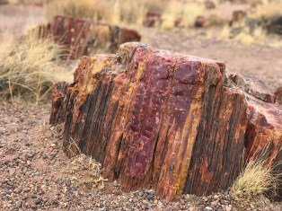 Chunk of Rainbow Petrified Wood
