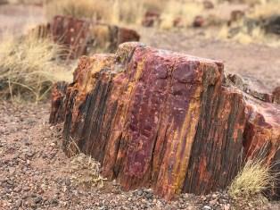 Chunk of Rainbow Petrified Wood