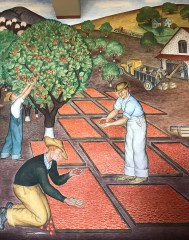 Coit Tower Murals of Orange Farmers