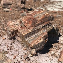 A Piece of colorful petrified wood along the Blue Mesa Trail