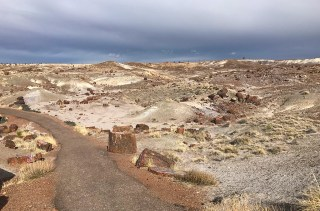 Crystal Forest in Petrified Forest National Park