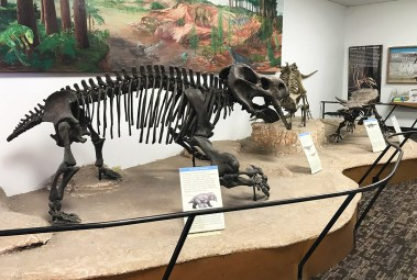 Dinosaur Skeletons at the Rainbow FOrest Museum and Visitor Center