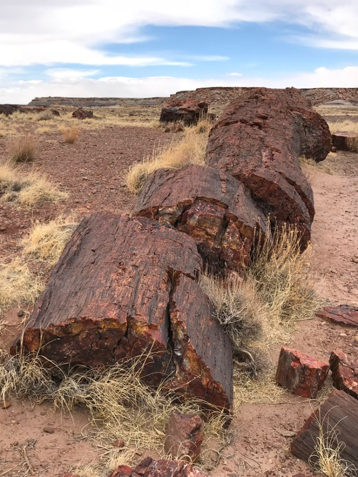 Giant Logs Trail Petrified Logs