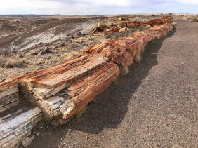 Giant Petrified Log in Crystal Forest