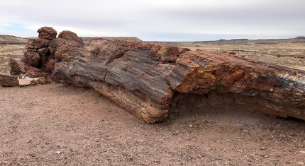 Giant Petrified Log