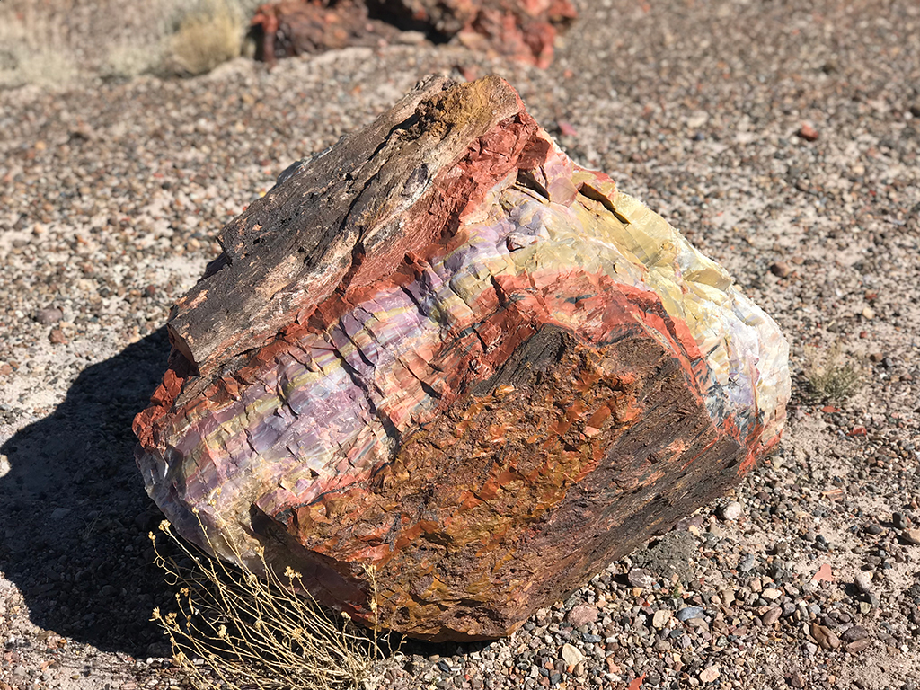 Natural Petrified Wood In Arizona