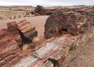 Petrified Logs on the Giant Logs Trail