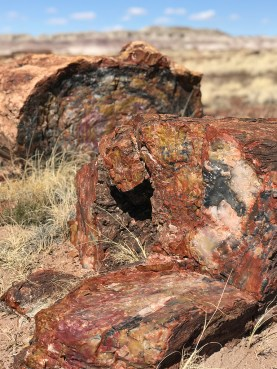 Petrified Tree Trunks in Arizona