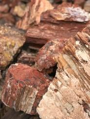 Buy Arizone Petrified Wood in Holbrook