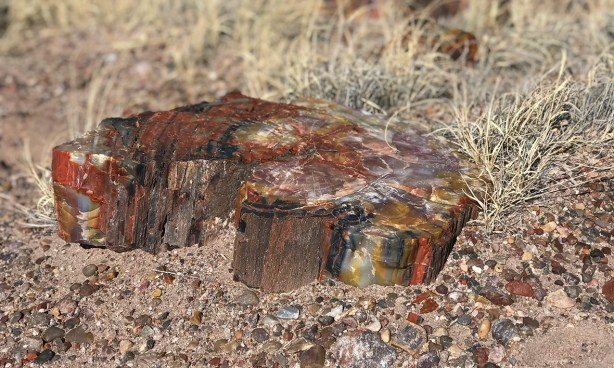 Petrified Wood Showing The Petrified Tree Bark