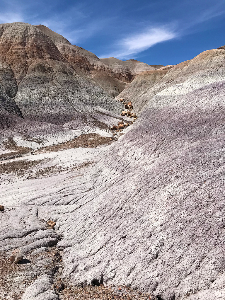 Views of Petrified Wood From The Blue Mesa Trail