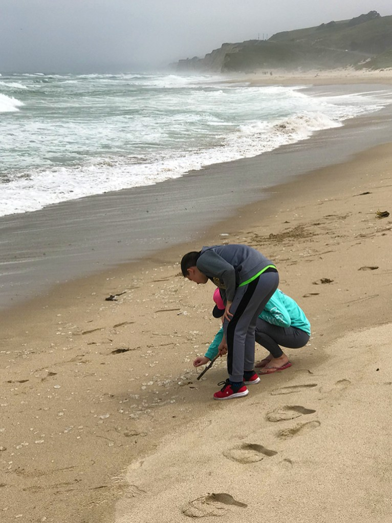 Natalie and Carter Bourn Investigating Moon Jellies at Pescadero State Beach