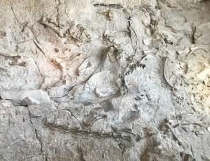 Dinosaur Fossils In Utah