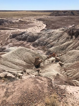 Petrified Wood Scattered Across The Arizona Painted Desert