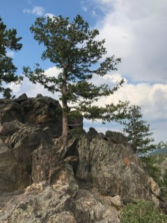 Tree Growing Out Of A Rock
