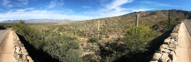 Cactus Forest Overlook