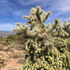 Prickly Cactus at Saguaro National Park