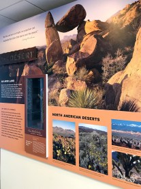 Desert Exhibit at the Panther Junction Visitor Center