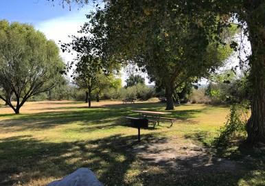 Rio Grande Village Picnic Area