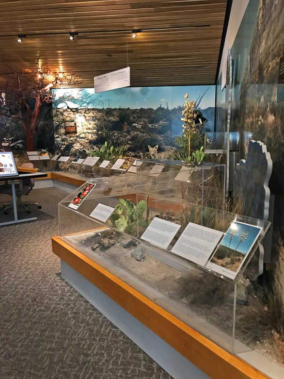 Visitor Center Natural History Exhibits at Guadalupe Mountains National Park