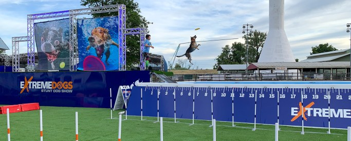 Sac County Fair Show: Extreme Dogs Jumping Into Pool Of Water