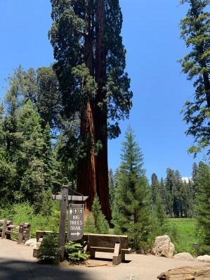 Big Trees Trail Trailhead Sign
